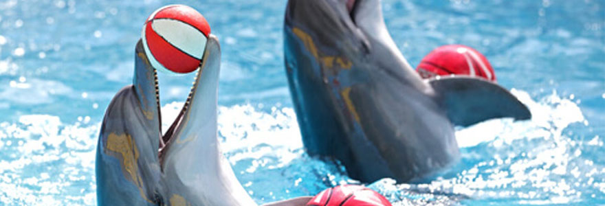 Voir des dauphins en France